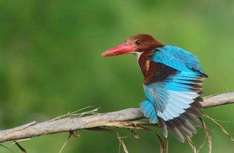 Kuş Gözlemciliği